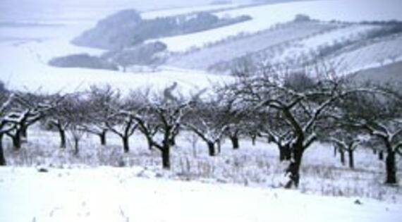 Vignes sous la neige Bienvenue à la ferme