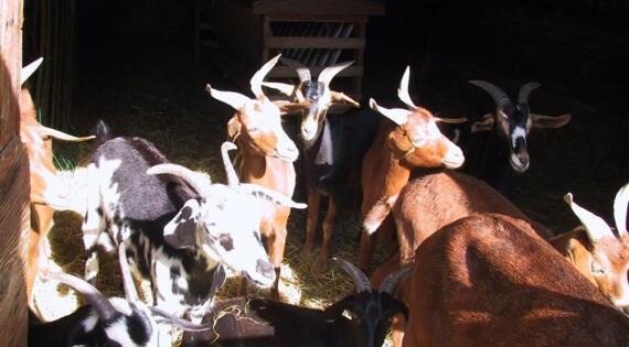 fa_21_la_ruchotte Bienvenue à la ferme