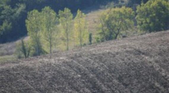 Paysage de GIBEL dans le Lauragais
