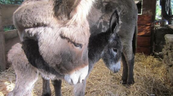 Asinerie Badjane Gard Bienvenue à la ferme