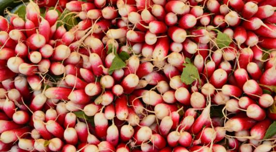 Radis produit légume de saison printemps