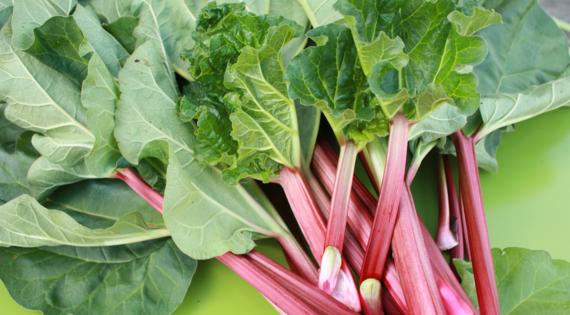 Rhubarbe produit de saison fruit légume
