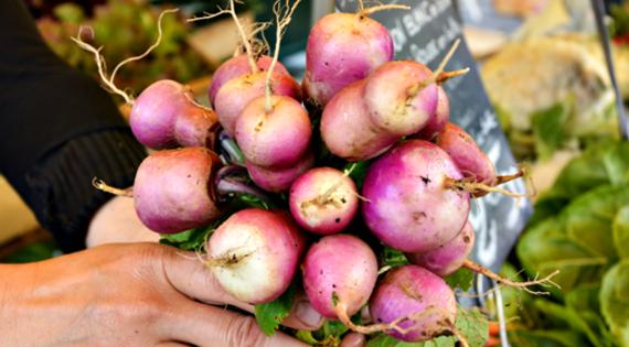 Navet produit de saison plante automne hiver printemps