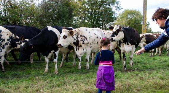 observer les vaches dans leur pré