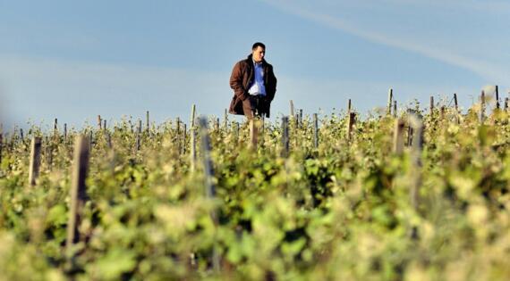 Vigneron dans ses vignes Champagne ASPASIE