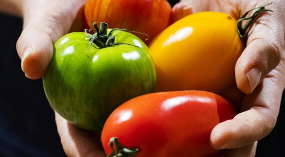 Tomate produit de saison Bienvenue à la ferme