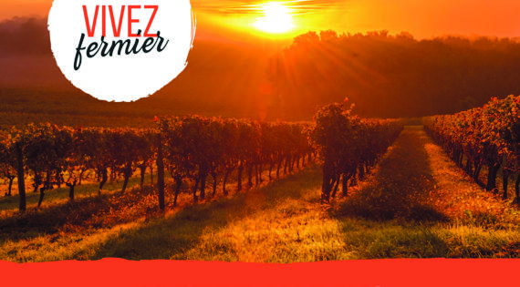 Soleil couchant dans les vignes