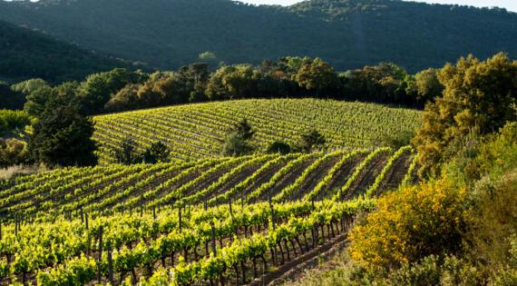 Côtes de Provence - Crédit Photo Amaury Brac pour Val D'astier