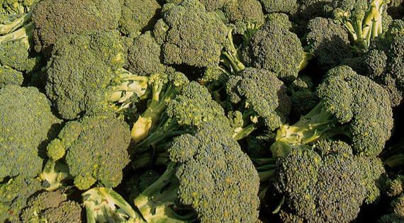 Brocolis légume produit de saison Bienvenue à la ferme