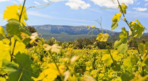 Sainte Baume - Photo Route des Vins de Provence Hervé Fabre