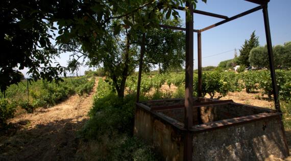 Domaine de la Chrétienne - Vignes - Crédit photo José Nicolas