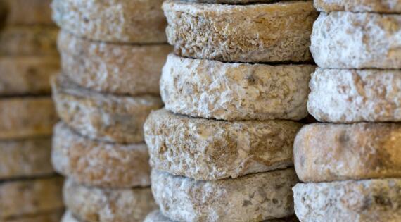 VAR Fromage, Crédit Photo Camille Moirenc Dracénie Provence Verdon Tourisme