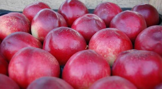 Nectarine fruit été produit de saison Bienvenue à la ferme