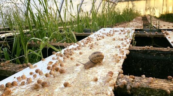 la ferme aux escargots 76