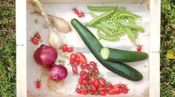 Salade de petits pois fraîcheur