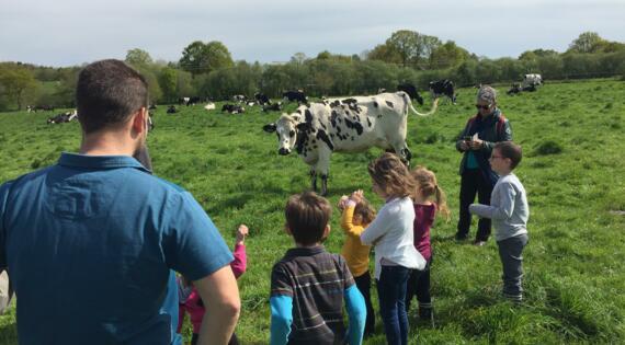 A la rencontre des vaches