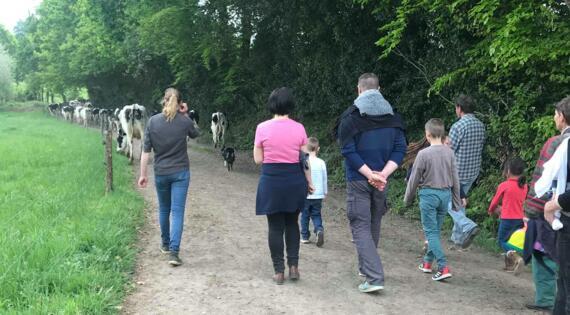 Allez chercher les vaches au champ !