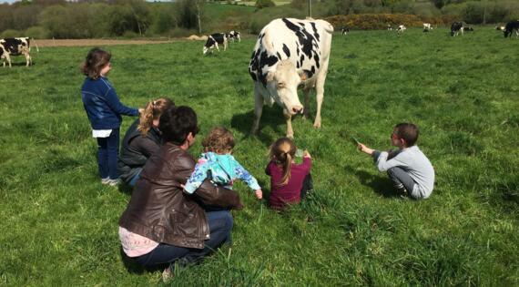 En famille, à la rencontre des vaches !