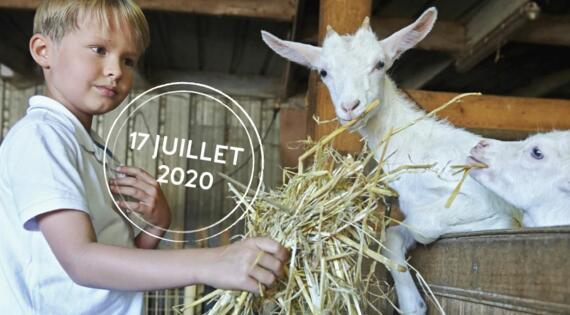 Enfant donne manger à chèvres