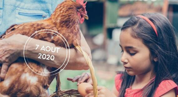 Enfant ramasse les oeufs de poule