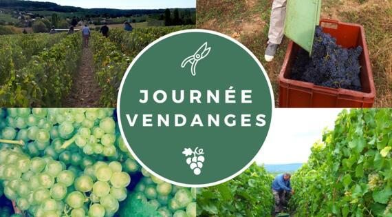 Journée Vendanges en Champagne Julien CHOPIN