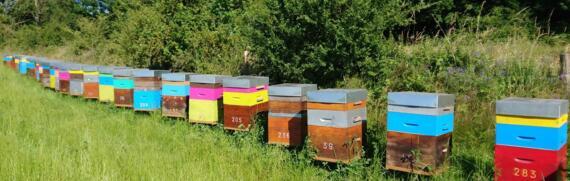 Les ruches de La Ferme de l'Herbonne
