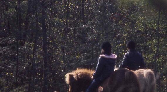 balade en sous bois
