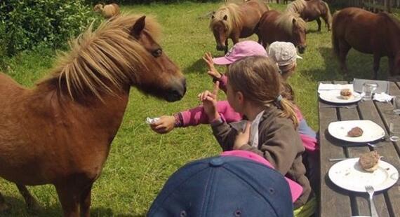 complicité avec les poney