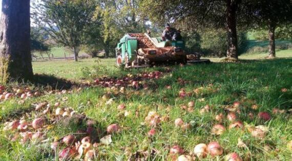 ramassage pommes_ferme de la butte