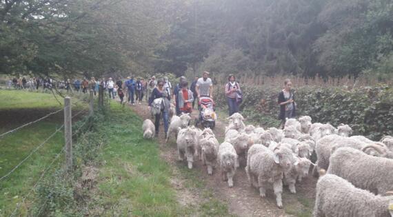 Marche avec les chèvres La Bouquetière