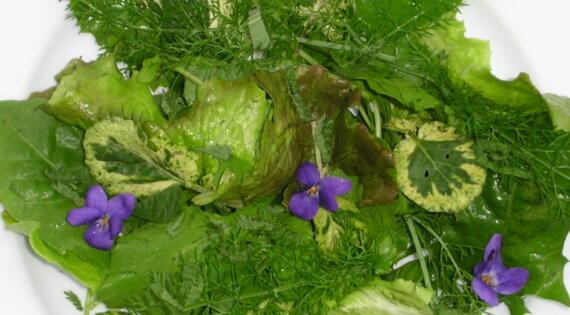 Salade composée des Fleurs Anglaises