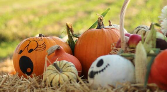 Courges pour Halloween Cueillette de Muizon