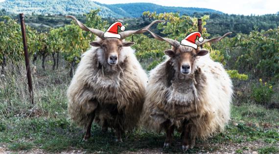 Bonne année meilleurs voeux Bienvenue à la ferme