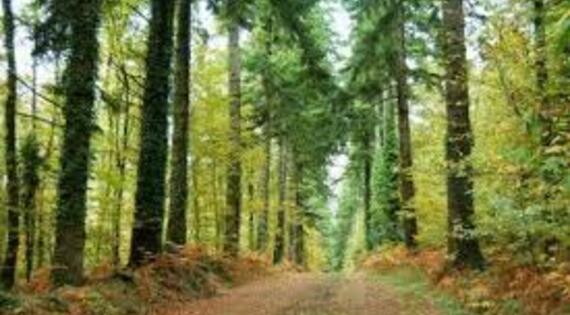 Forêt de Toulfoën