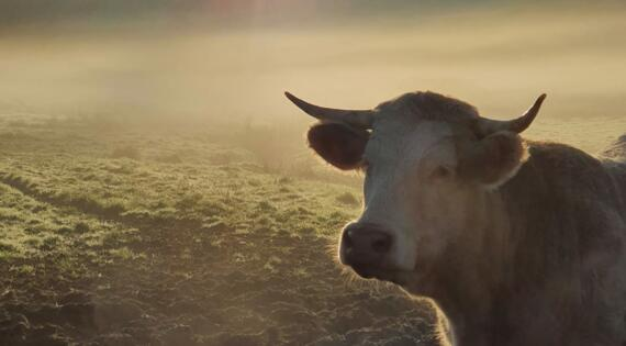 La Bidoche d'Artus viande bovine et ovine