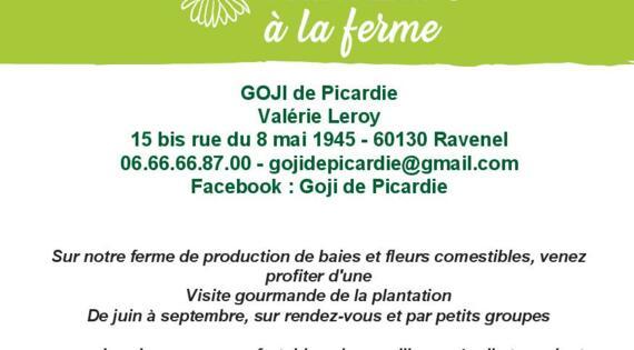 Printemps 2021 Goji de Picardie