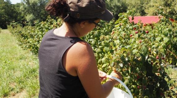 Visite de l'exploitation de petits fruits et aromatiques