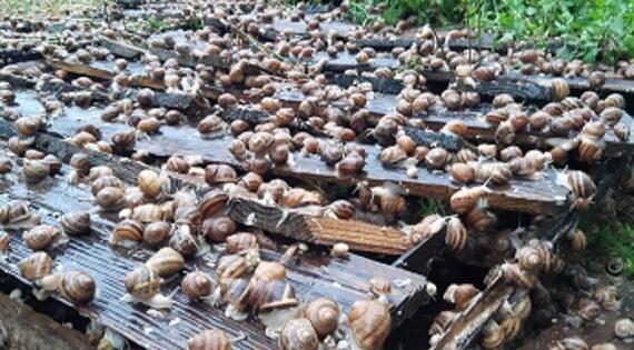 élevage en conditions naturelles de La Caracole