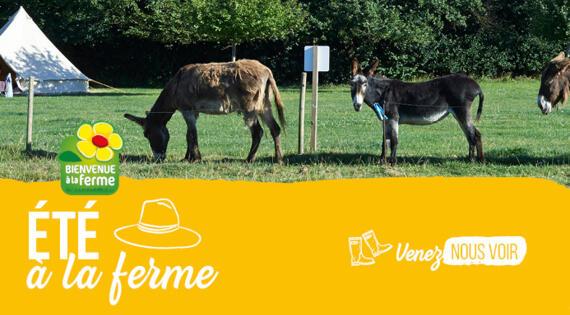 L'été 2021 à la ferme en Pays de la Loire