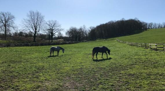 Les chevaux de la ferme du Menil St michel