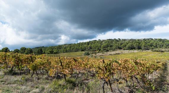 Domaine Les Cascades - Vignes