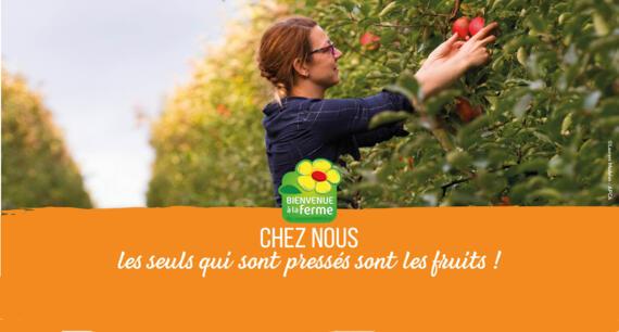 L'automne à la ferme en Bretagne