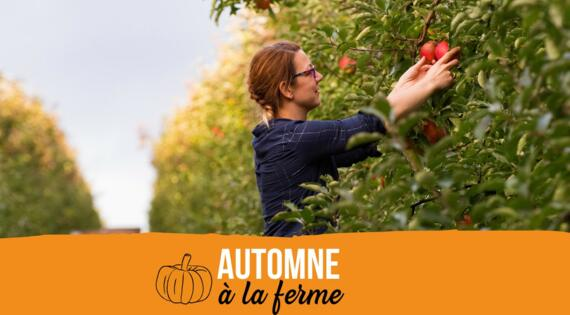 automne à la ferme