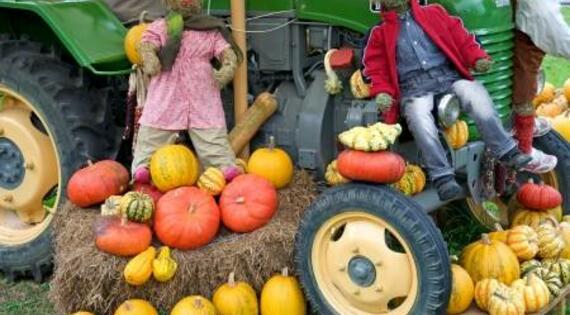 Halloween à la ferme